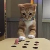 Cat silly finger play